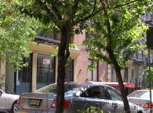 NYC Street Trees